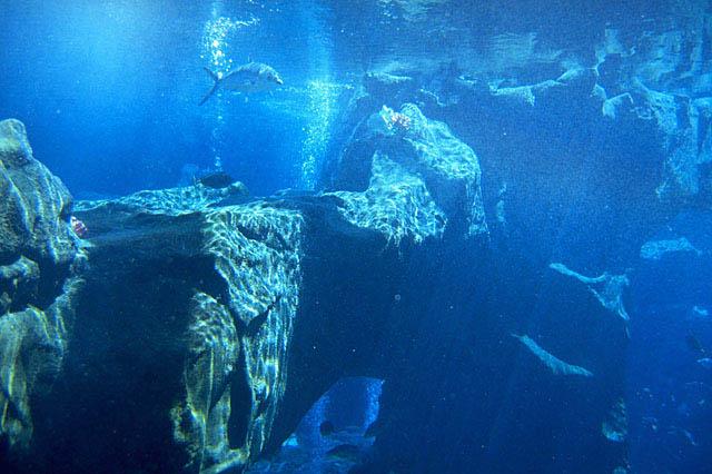 イースター島ダイビング
